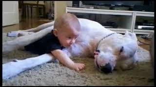 Собаки и дети, лучшие друзья. Dogs and Baby, the best video. (Перезалив)