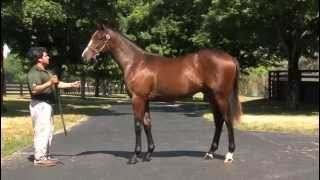 Before They Were Stars: Saratoga Sale grad CONSTITUTION as a yearling!