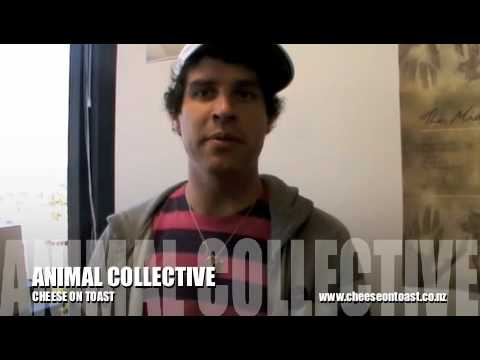 Animal Collective interview