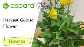 Harvest Guide: Flower
