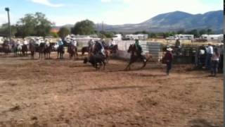 Illumnati - Sorrel Head Horse Consigned to the Billings Livestock Fall Sale