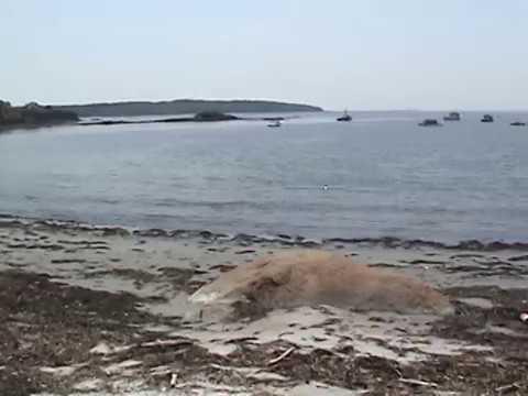 "Notorious ""Stinky Beach"" Cliff Island #Maine"