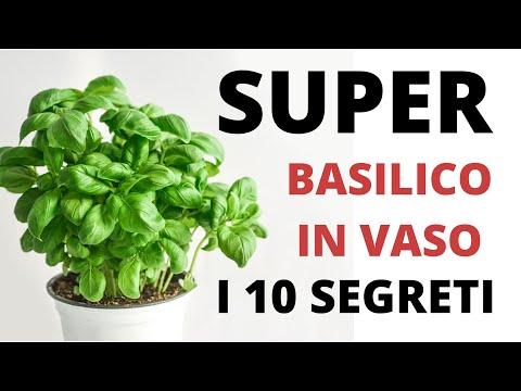 Basilico in vaso SUPER! Le 10 cose da fare