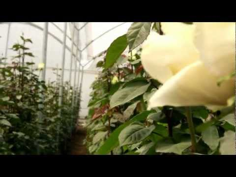 Quito Inor Flowers video empresarial 3