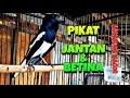 Pancingan Kacer Pikat Betina Jantan Langsung Respon Gacor  Mp3 - Mp4 Download