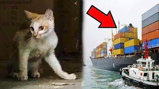 Кот 45 дней выживал на корабле без еды и воды
