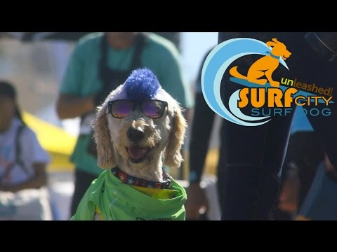 Unleashed by Petco Surf City Surf Dog® | 2016