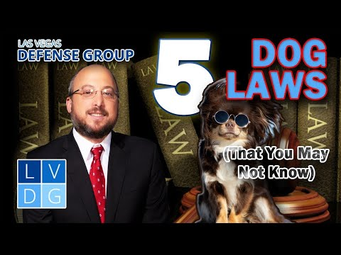 5 Nevada dog laws you may not have known existed