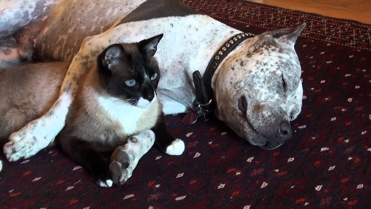 Dog That Loves Cats