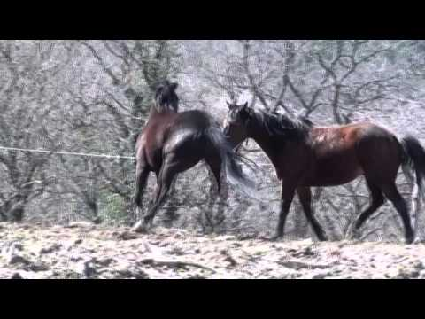 Funny Animals Horses Mating Up Close And Hard For A Long Time 2015 ...