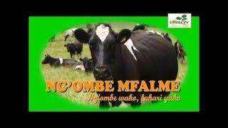NG'OMBE MFALME BAN CONSTRUCTION, FEEDING, WORMS & CLEANLINESS EPISODE