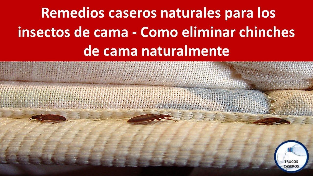 remedios caseros naturales para los insectos de cama