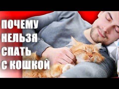 Вопрос: Почему кошки не любят спать с людьми?