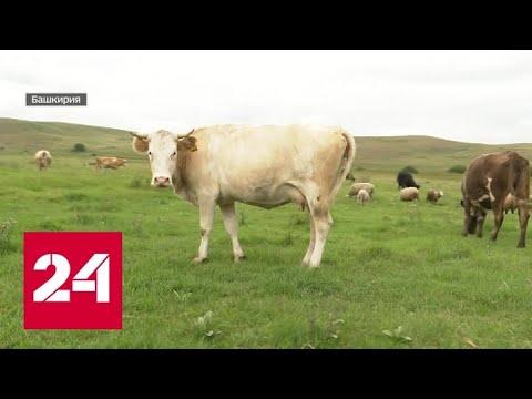 Башкирские фермеры не