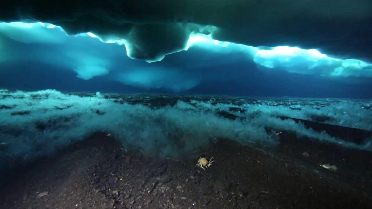 Antarctica Diving McMurdo October 2012 - YouTube