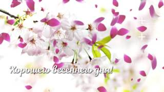 Хорошего весеннего дня!
