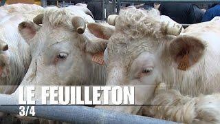 Dans les coulisses du marché aux bestiaux de Sancoins : attirer les éleveurs