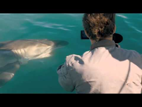 Dark Tide: First Shark