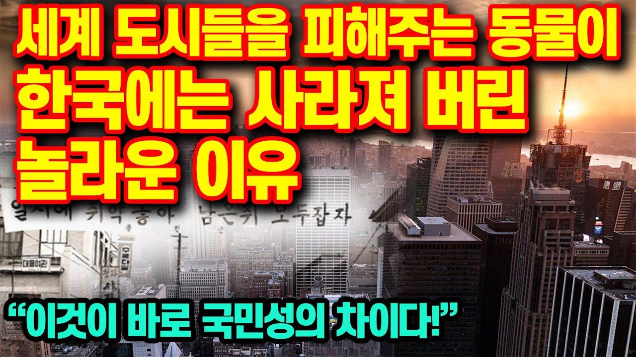 """세계 도시들을 피해주는 동물이 한국에는 사라져 버린 놀라운 이유""""이것이 바로 국민성의 차이다"""""""