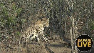 safariLIVE- Sunrise Safari - October 15, 2018
