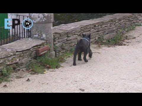 ¿Qué opinan los lucenses sobre el acceso de los perros a la Muralla?