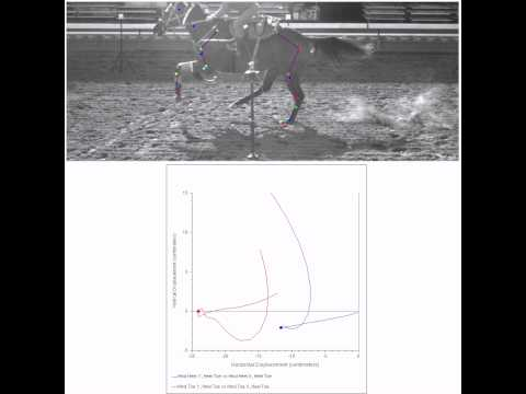 UCDavis Racetrack Surface Study: Hind hoof slide and orientation on a dirt surface