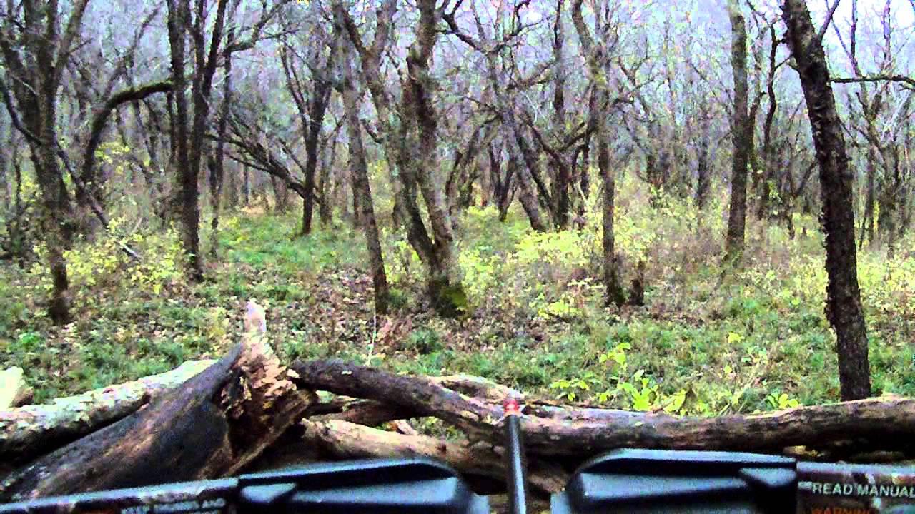 8 Pointer shot with Horton Summit 150 Crossbow