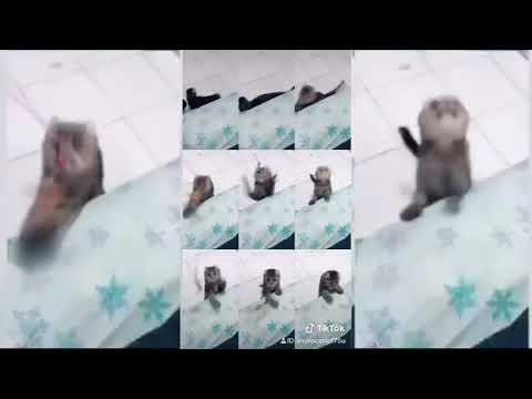 Tik Tok - Mr. Sandman Cats compilation #4