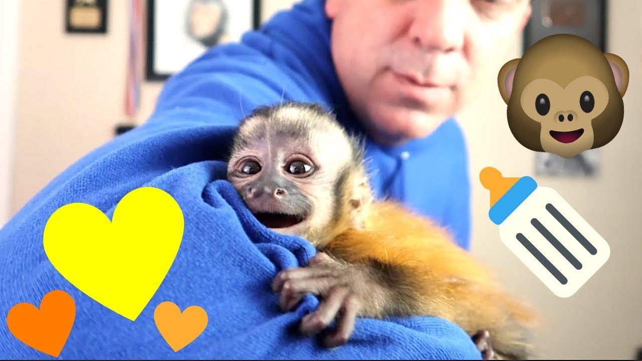 baby-monkey-amazing-magic-trick-surprise