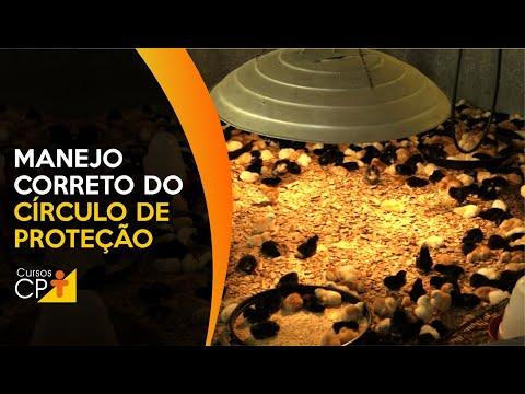 Clique e veja o vídeo Aves caipiras - Manejo correto do círculo de proteção
