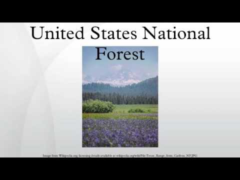 United States National Forest