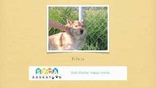 Adopt Felicia From Saskatoon Spca