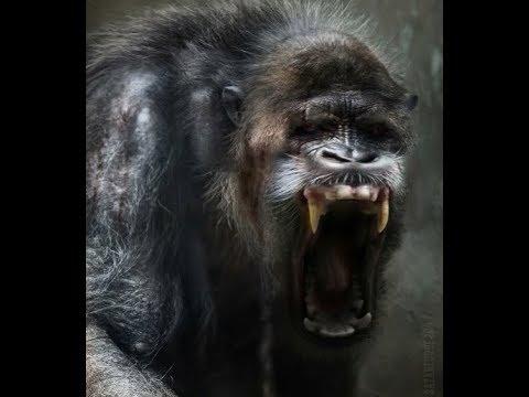 World Bigfoot Radio #60 ~ Wendigo and Gugwe, Northern Cryptid Horrors/Grant Brunetta