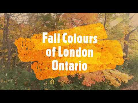 Fall Colours Of London Ontario