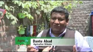 Desde la familia de VES al Perú: agricultura urbana