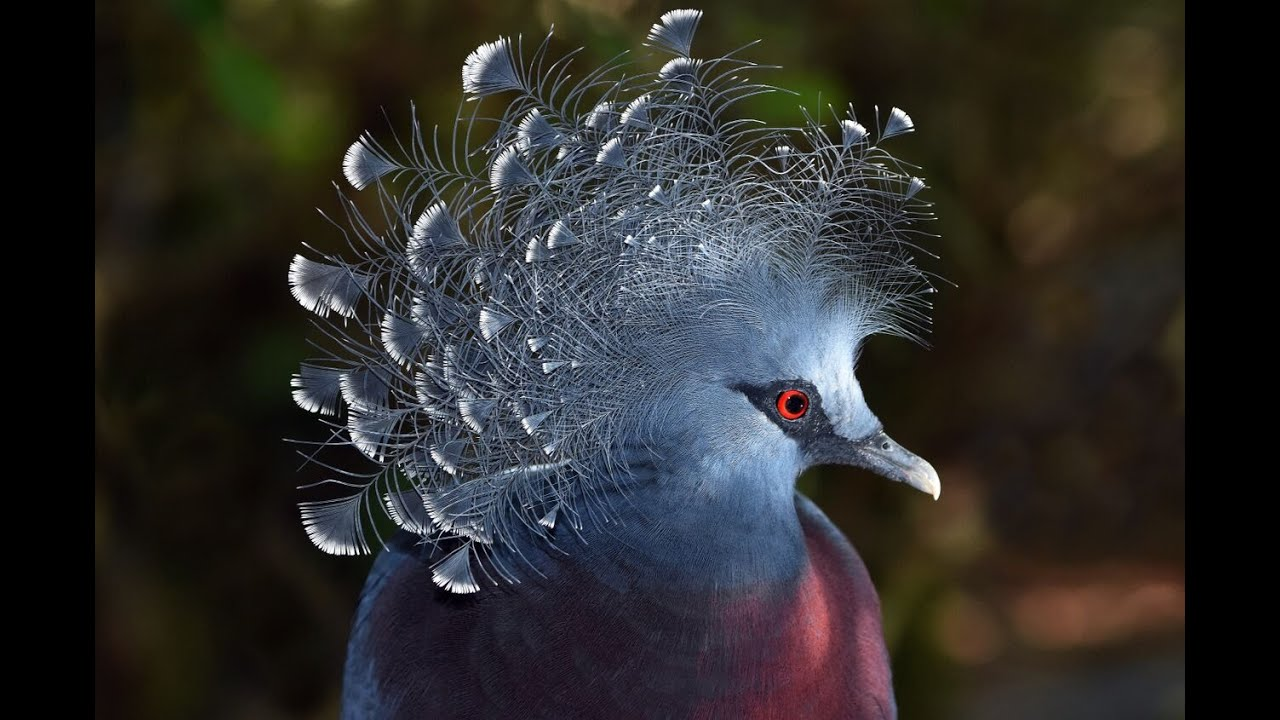 nikon behind the scenes a new perspective on bird photography