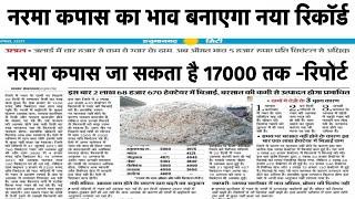 नरमा कपास का भाव जाएगा ₹12000, narma kapas ka bhav , cotton price today, narma ka bhav,kapas ka bhav