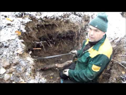 Ametists Under Snow 10,10,2013-АМЕТИСТЫ ПОД СНЕГОМ