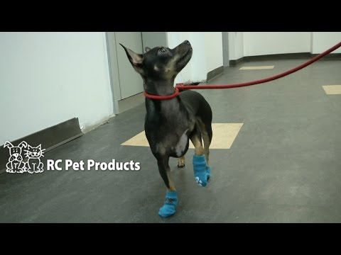 Pawks Puppet & Argyle Dog Socks from RC Pet Products