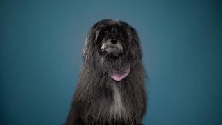 BRETT - Das mit dem Hund tut mir leid (Official Video)