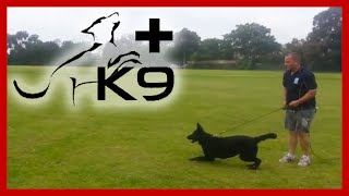 Dog Recall Training In Melbourne With Positive K9 Training