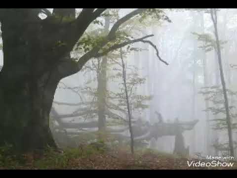 Ami manush hoiya (HD) voice