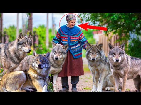 Старушка приютила и вырастила пятерых волчат. И вот как они её отблагодарили в трудную минуту...