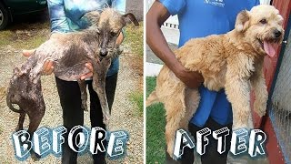 Before And After Pics Of Happy Rescued Dogs