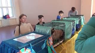2018 11 04 выставка кошек видео