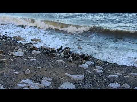Seal Survey/observation on behalf of Natural Resources Wales by Ocean Ecology