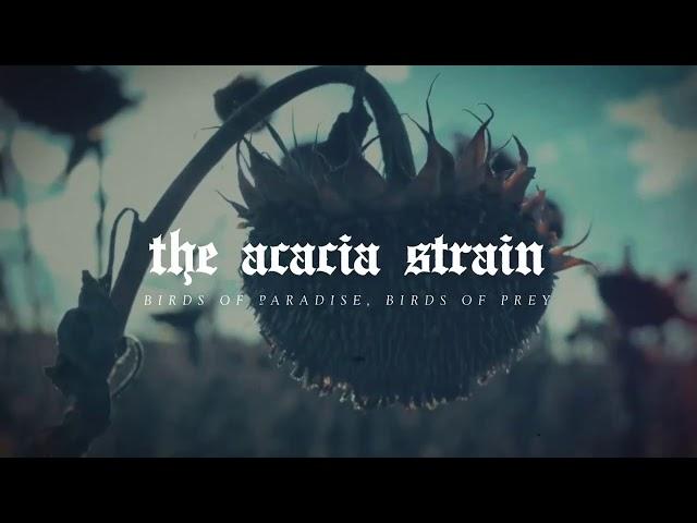 The Acacia Strain - Birds of Paradise, Birds of Prey