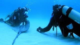Magnetic Stingray Repels Hammerhead Sharks
