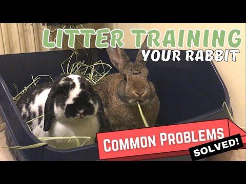 Hoe u uw konijn moet trainen | Oplossingen voor veelvoorkomende trainingsproblemen met zwerfvuil