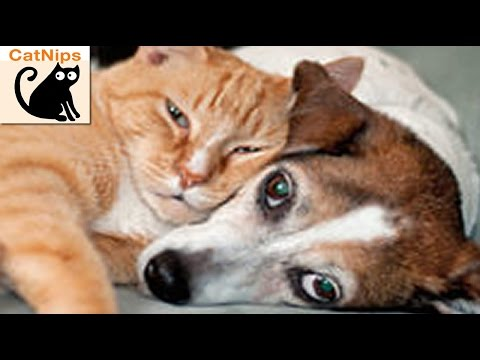 Adorable Cat Tries To Wake Up Sleepy Dog | CatNips